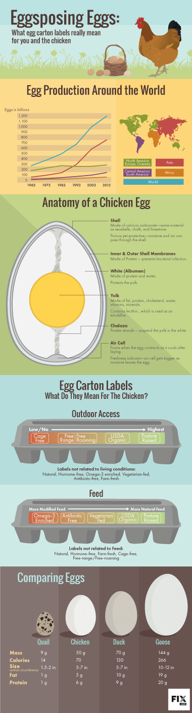 Eggsposing Egg Carton Labels | Fix.com