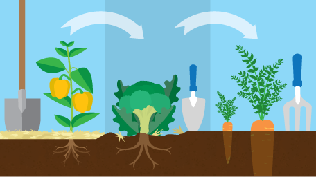 Easy Crop Rotation For Your Garden