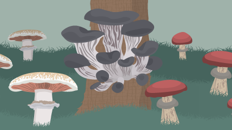 Make Room for Mushrooms