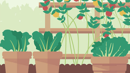 Simple Vegetable Garden Tips