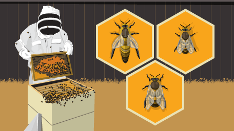 Become a Backyard Beekeeper