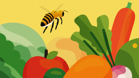 More Than Honey: Honeybees and Our Food System