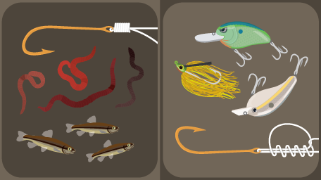 Bait vs Lures
