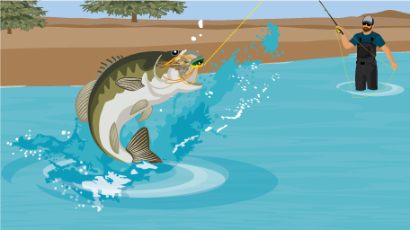 How to Catch Bass on a Fly Rod